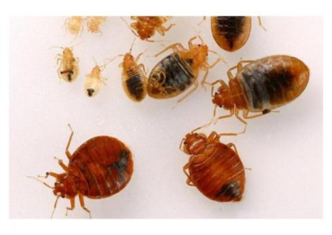 Best Bed Bugs And Pest Control Company In Lagos